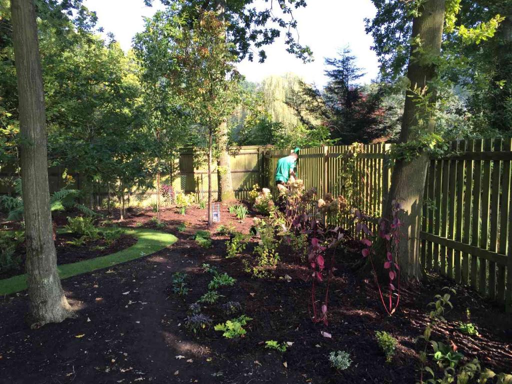 Vibrant woodland garden in Woburngreen