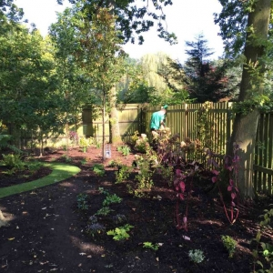 small woodland area in garden