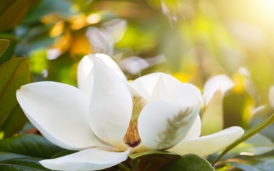 Gardening Tips for March