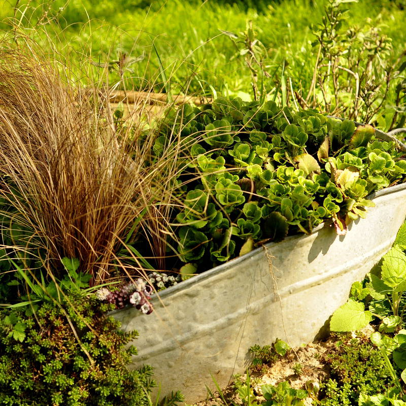 summer pot