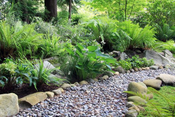 Woodland shade garden path lined with Hosta and fern.