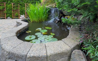 Why Every Garden Needs A Water Feature