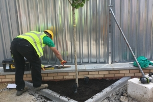 planting trees for commercial landscaping