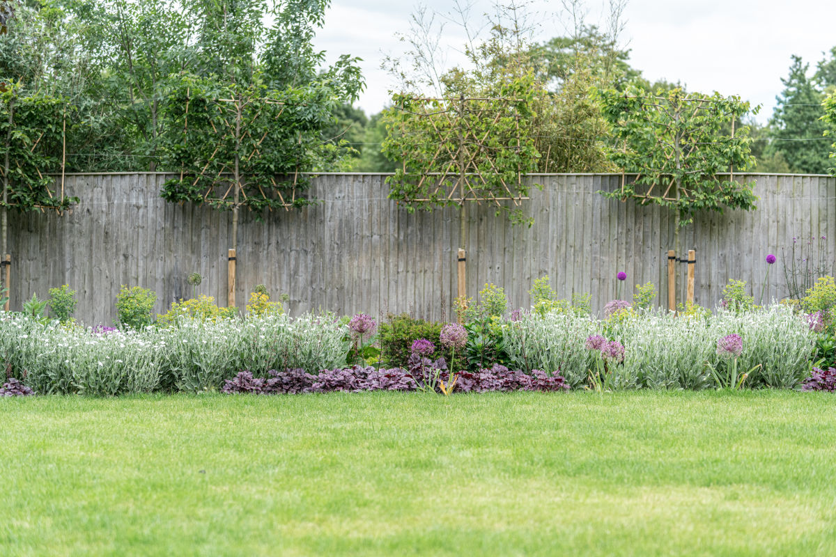 flower borders with pleached trees