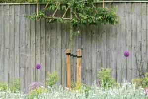 pleached tree in flower bed