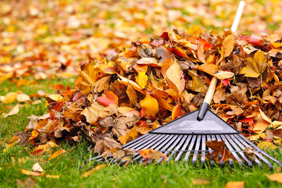 autumn leaves with rake