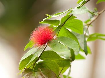 striking red foliage