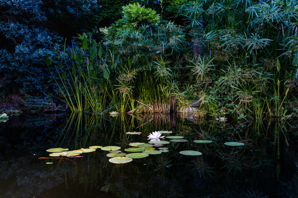 garden lighting highlighting plants at edge of pond