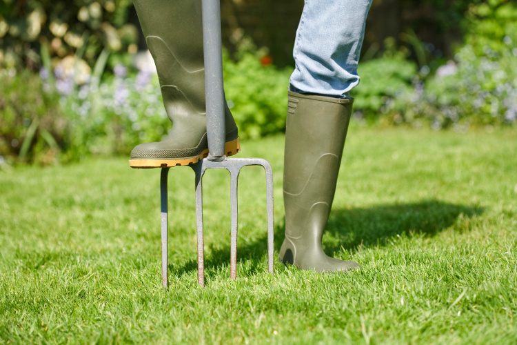 aerating the lawn with a garden fork