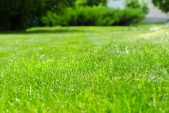 Summer Lawn Care – The Essentials