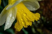How to protect your garden from wet and windy weather
