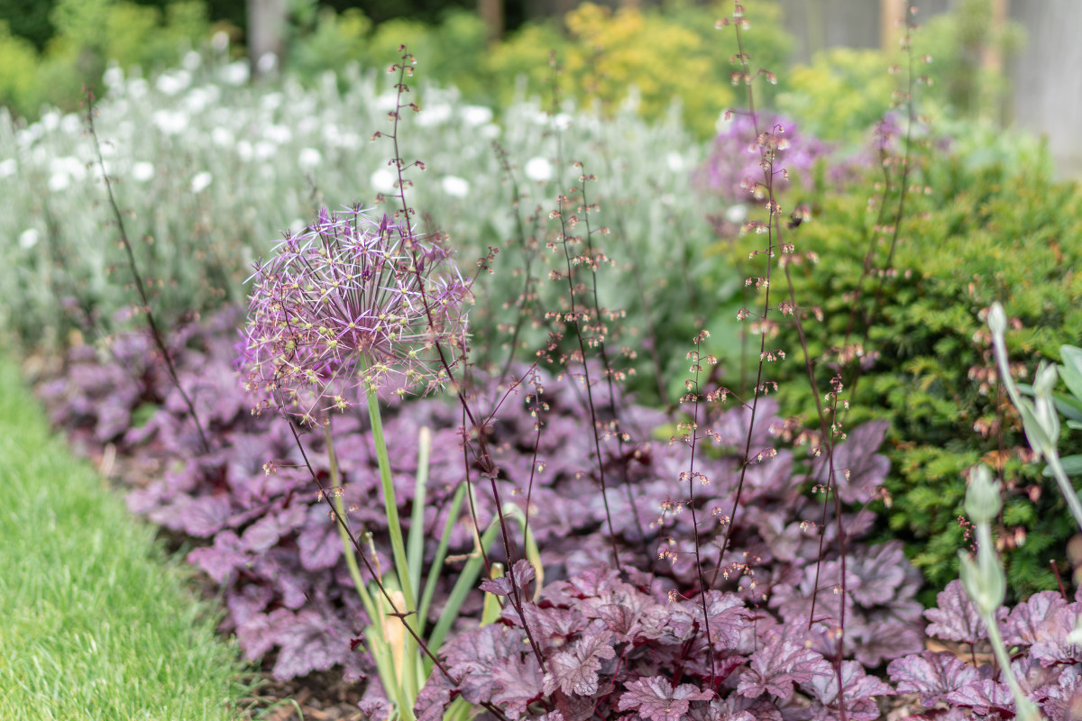 silver and purple planting scheme