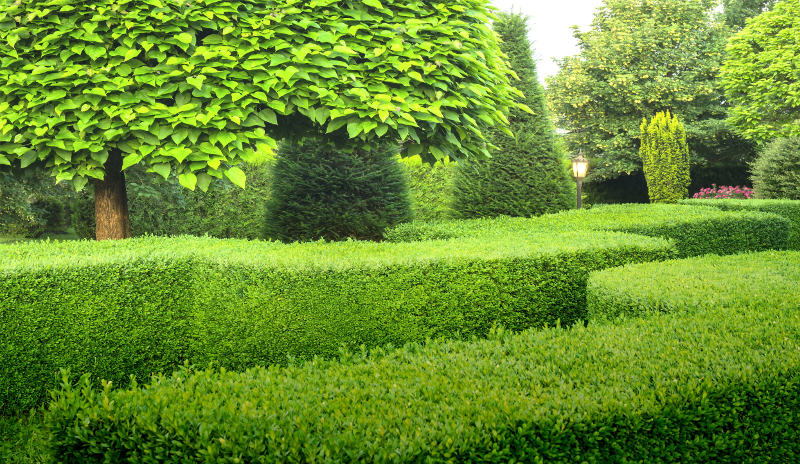formal clipped hedging