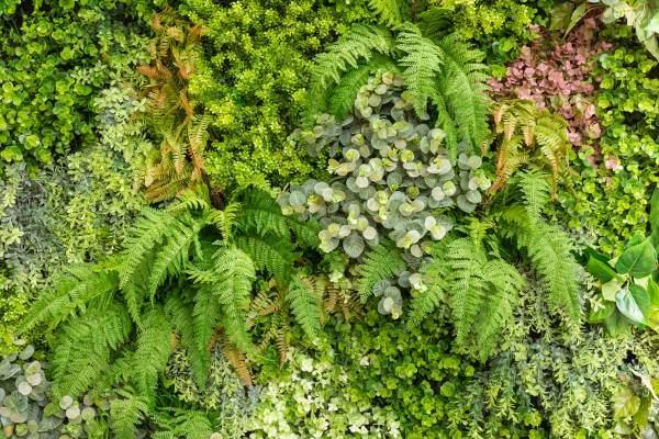ferns in green wall
