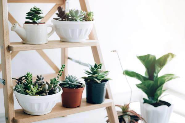 plants on step ladder