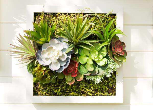 succulents planted in picture frame