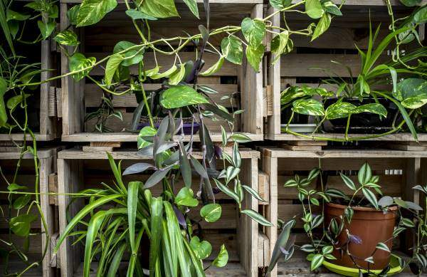 vertical garden made with crates